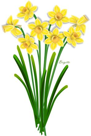 Daffodil Clip Art Images & Pictures - Becuo