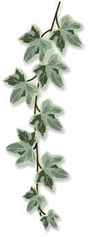 Ivy Clipart by Brigitte