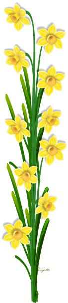 1000 Free Daffodils amp Spring Images  Pixabay
